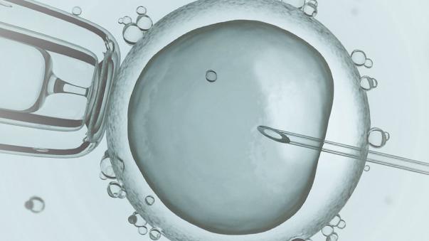 Congelación de embriones fecundación in vitro
